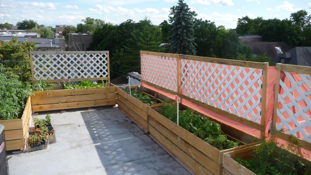 Picture of: Beautiful Urban Vegetable Gardening