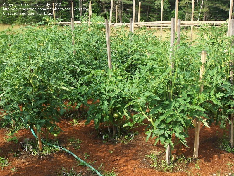 Picture of: Beginner Vegetable Garden 2017
