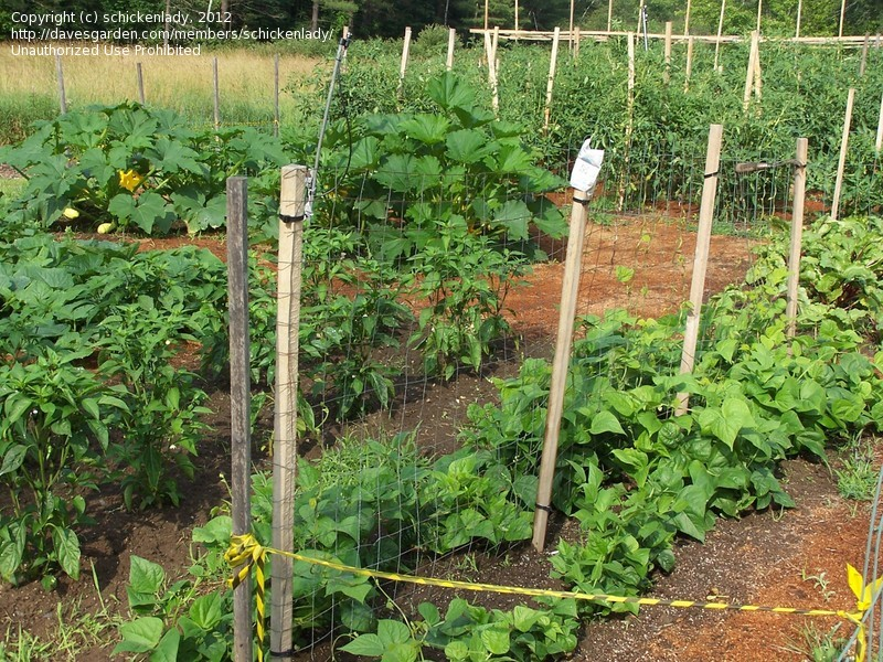 Picture of: Beginner Vegetable Garden Design