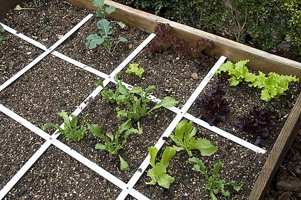 Picture of: Beginner Vegetable Garden Image