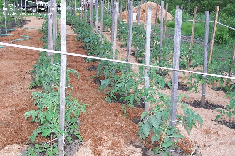 Picture of: Beginner Vegetable Garden Plan