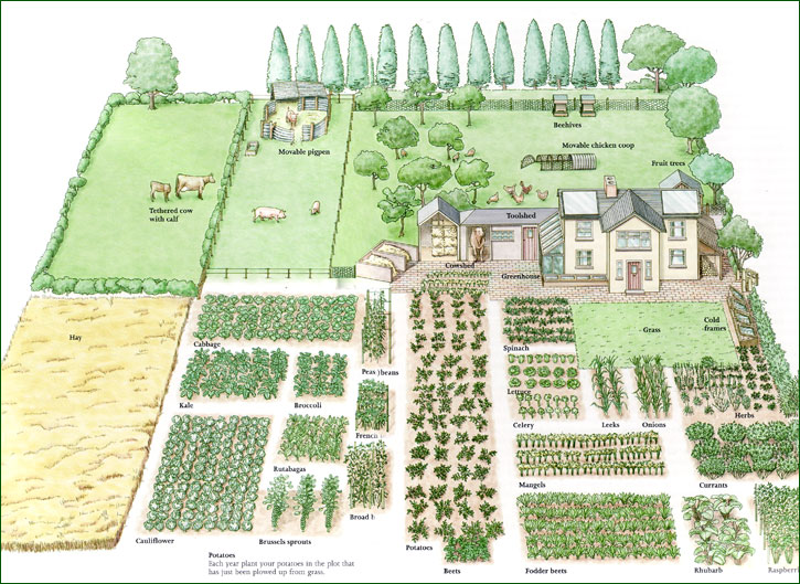 Picture of: Best Vegetable Garden Layout Design 3D