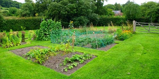 Picture of: Cool Beginner Vegetable Garden