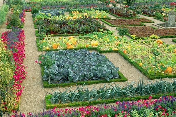 Picture of: Full Color Best Vegetable Garden Layout Design