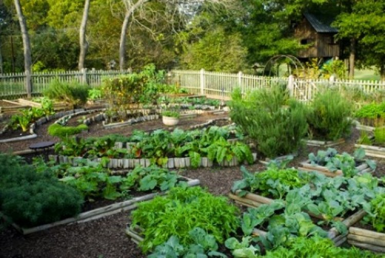 Picture of: Go Green Best Vegetable Garden Layout