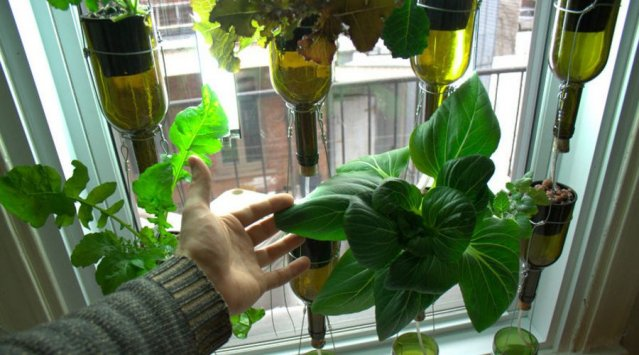 Picture of: How to Indoor Vegetable Gardening