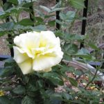 Rose Fertilizer For Vegetable Garden