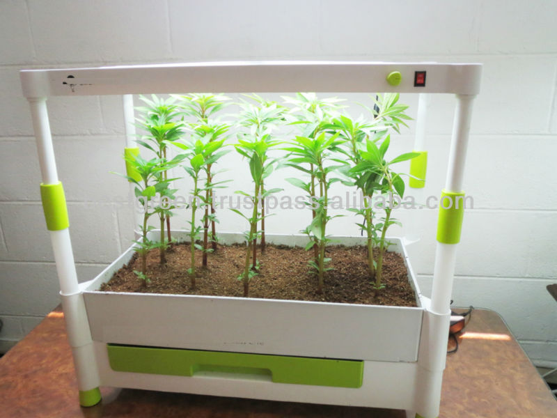 Picture of: Small Indoor Vegetable Gardening