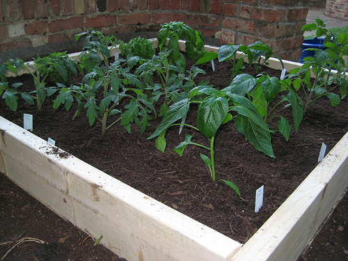 Picture of: Square Beginner Vegetable Garden