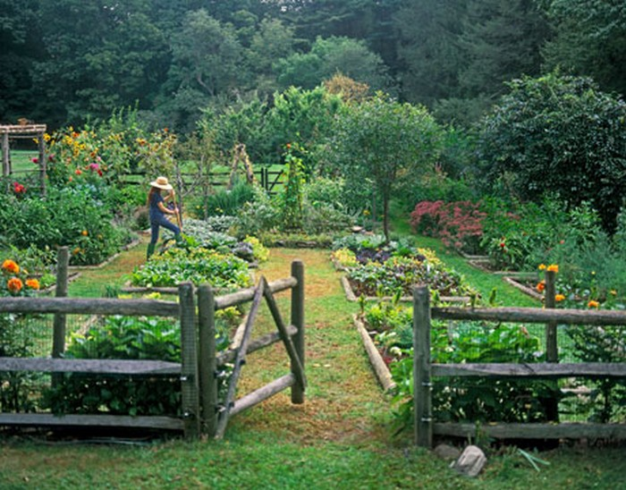 Picture of: Tradditional Best Vegetable Garden Layout