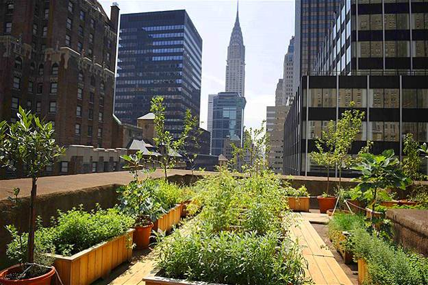 Urban Vegetable Gardening Design