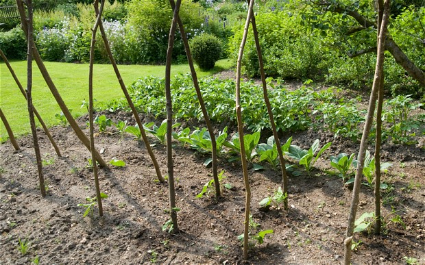 Picture of: Vegetable Garden For Beginners in tips