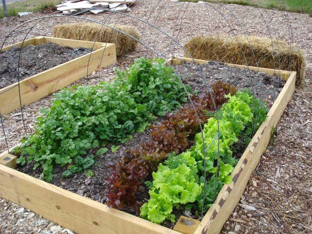 Vegetable Garden For Beginners Solution