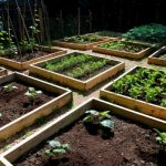 Backyard Urban Vegetable Gardening