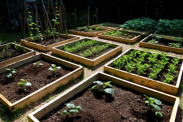 Picture of: backyard Urban Vegetable Gardening