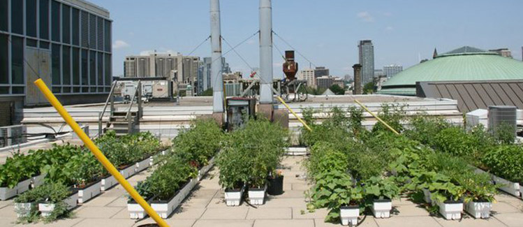 Picture of: build Urban Vegetable Gardening