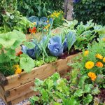 organic Vegetable Garden For Beginners