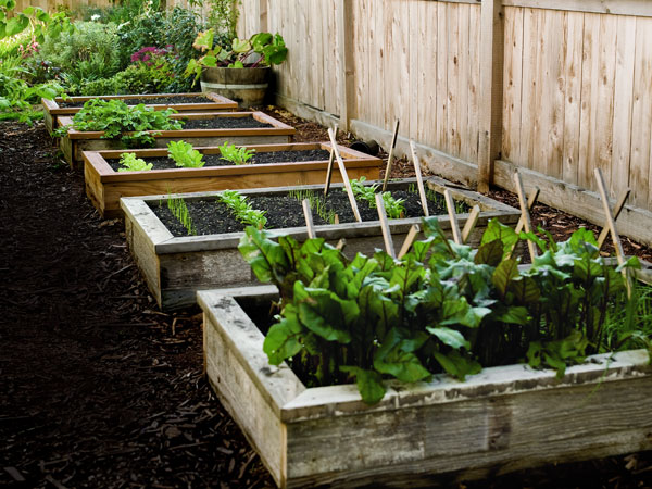 Picture of: raised beds Urban Vegetable Gardening