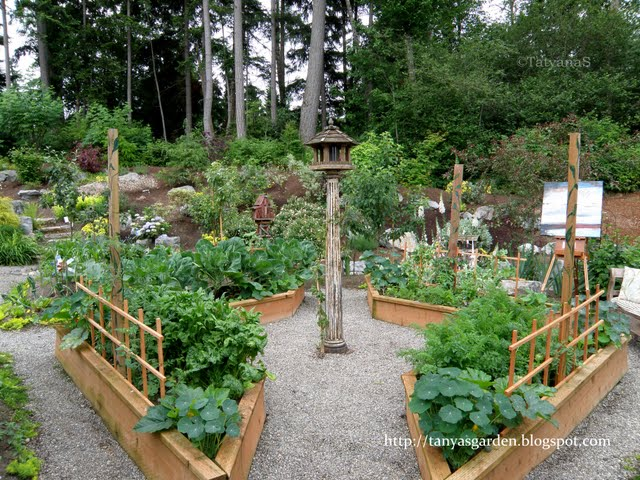 Picture of: simple Raised Vegetable Garden Layout