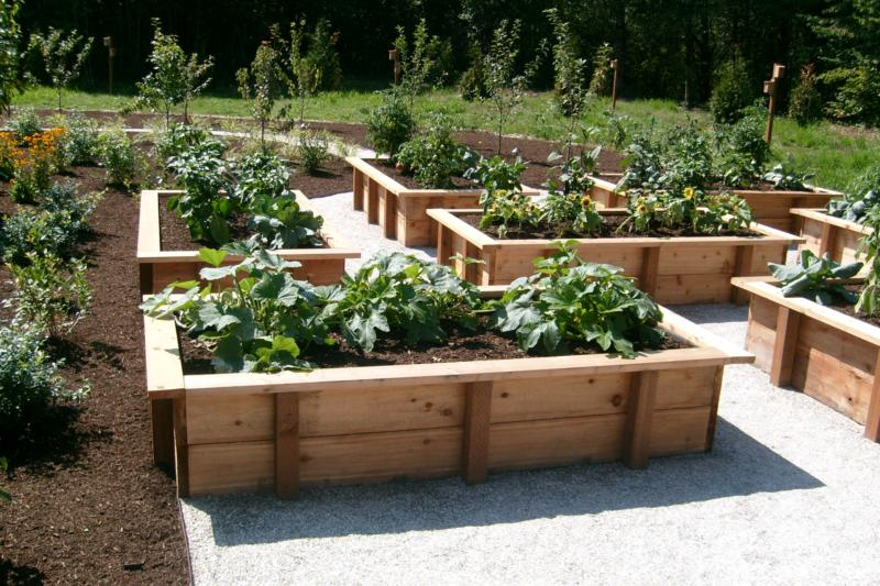 Wood Raised Vegetable Garden Layout