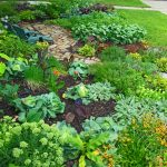 Front Yard Vegetable Garden Plants
