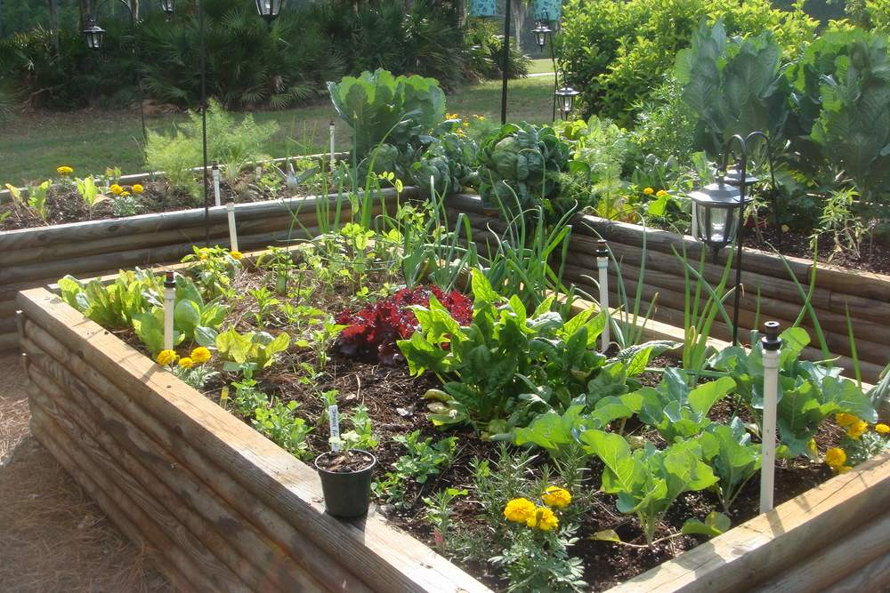 Picture of: Spring planting vegetable garden