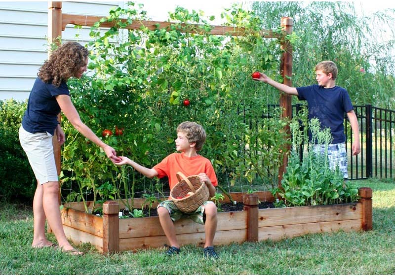 Picture of: bed planting vegetable garden