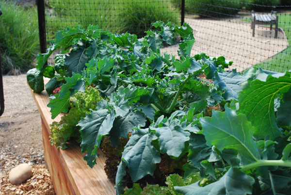 Picture of: modern planting vegetable garden