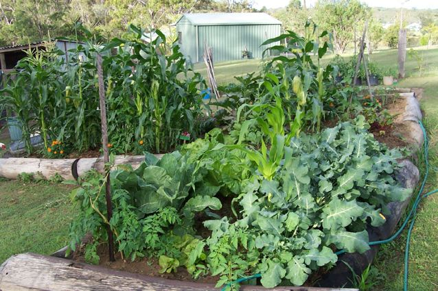 Picture of: planting vegetable garden home