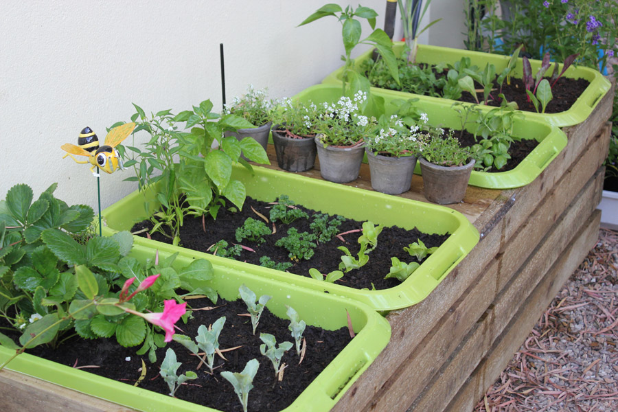 Picture of: planting vegetable garden ideas