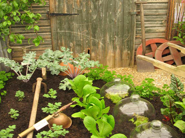 Picture of: small vegetable garden layout photo