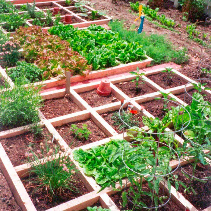 Image of: small vegetable garden layout picture