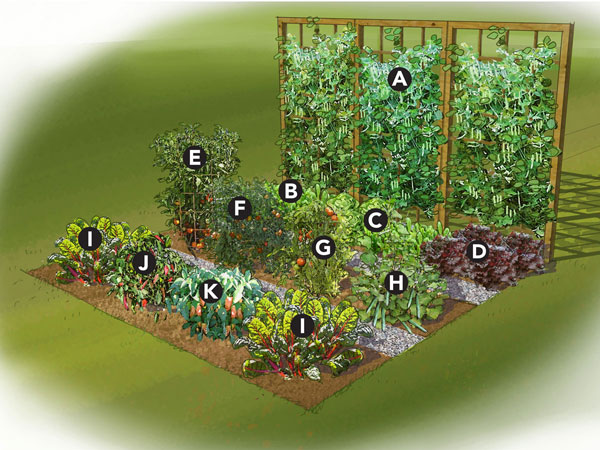 Small Vegetable Garden Layout Plan