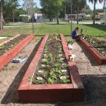 Small Vegetable Garden Layout Plans