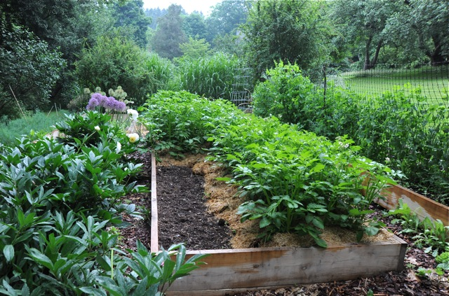 Picture of: space planting vegetable garden