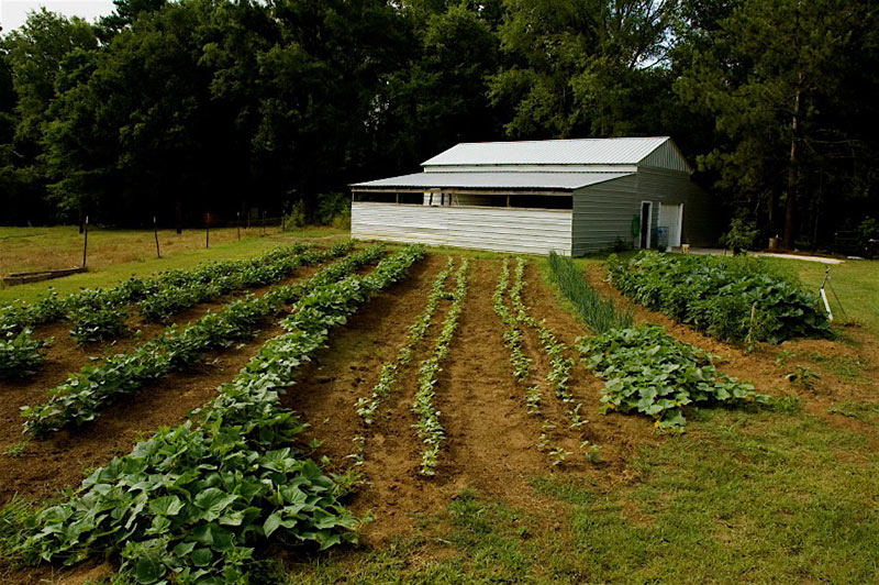 Picture of: vegetable garden plants spacing
