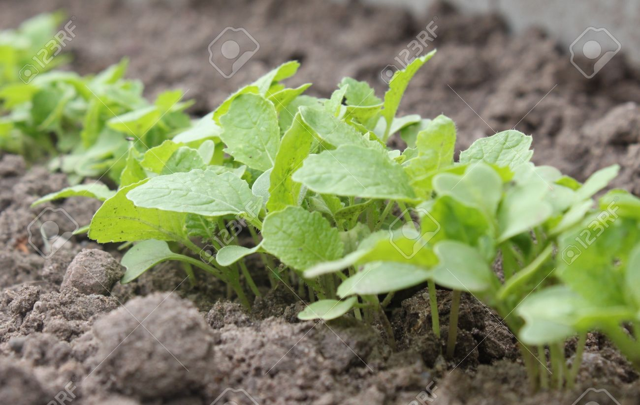 Picture of: vegetable garden plants type