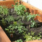 What To Planting Vegetable Garden