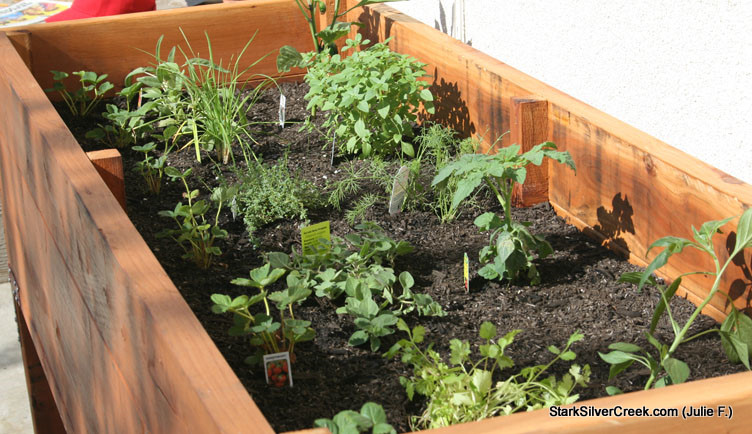 Picture of: what to planting vegetable garden