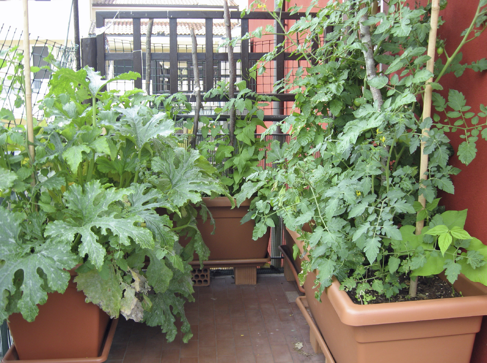 Picture of: Balcony vegetable garden in pot