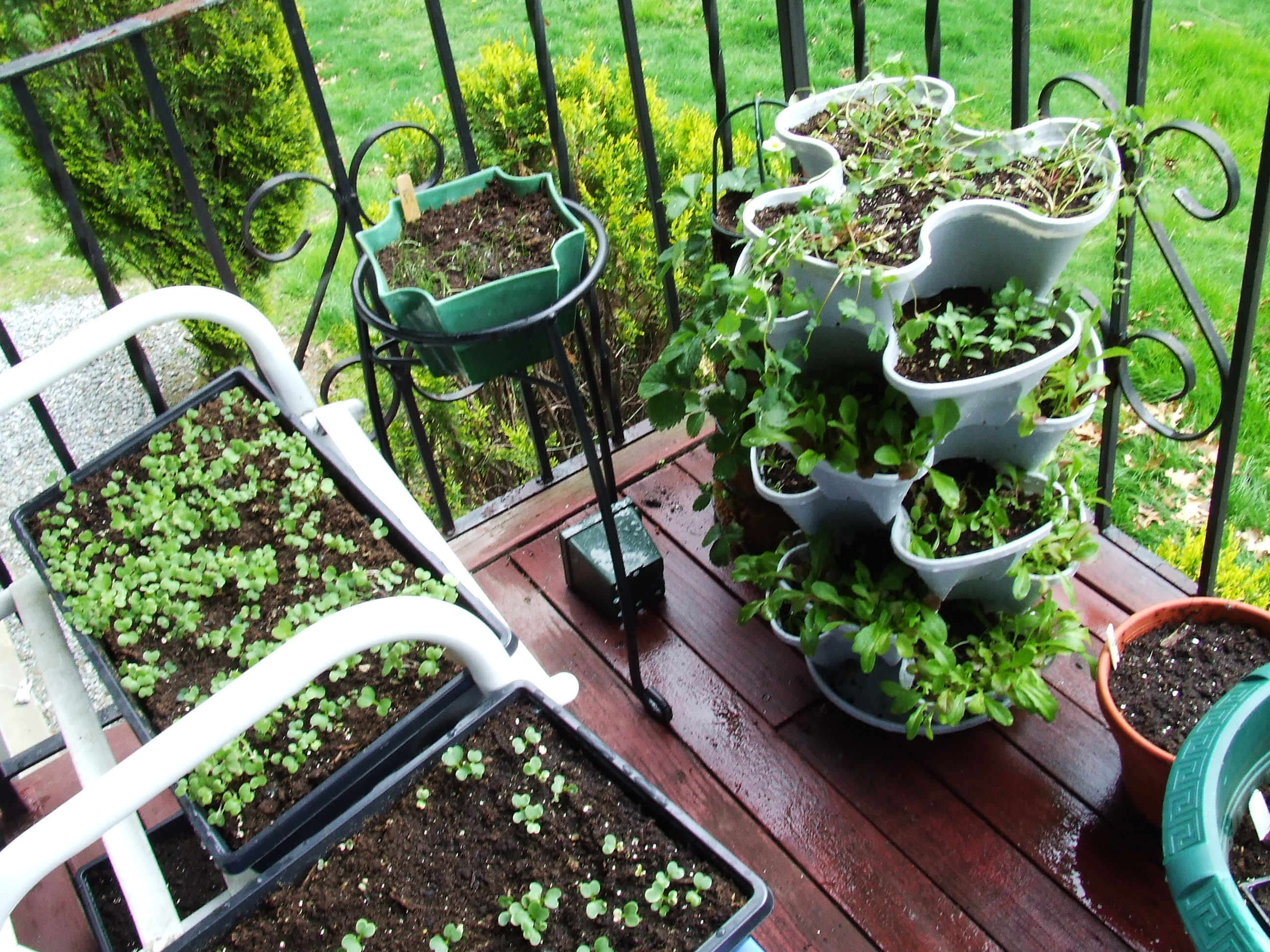 Picture of: Good balcony vegetable garden