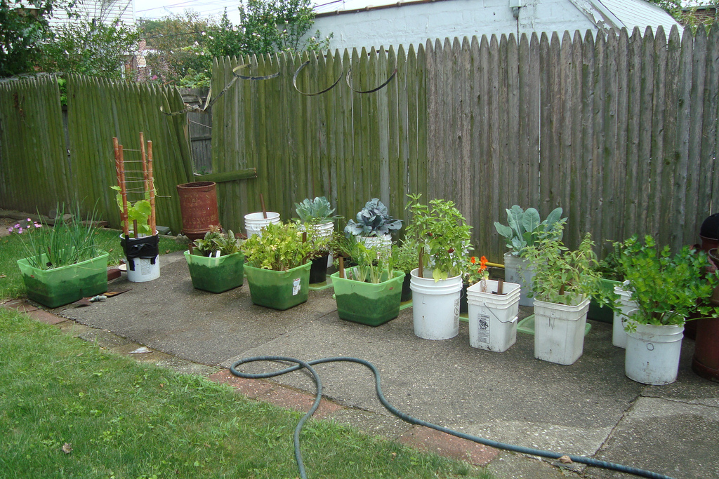 Image of: container potted vegetable garden