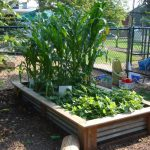 Easy Raised Vegetable Garden Ideas