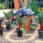 Potted Vegetable Gardening