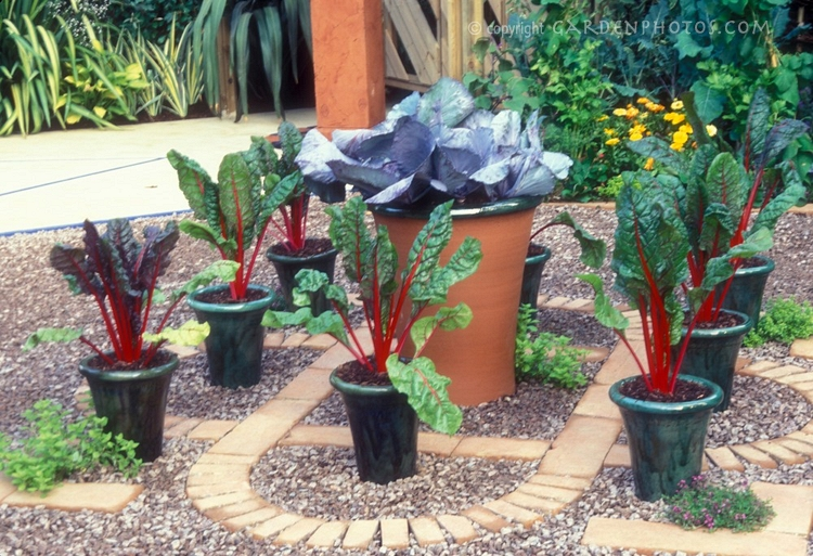 Image of: potted vegetable gardening