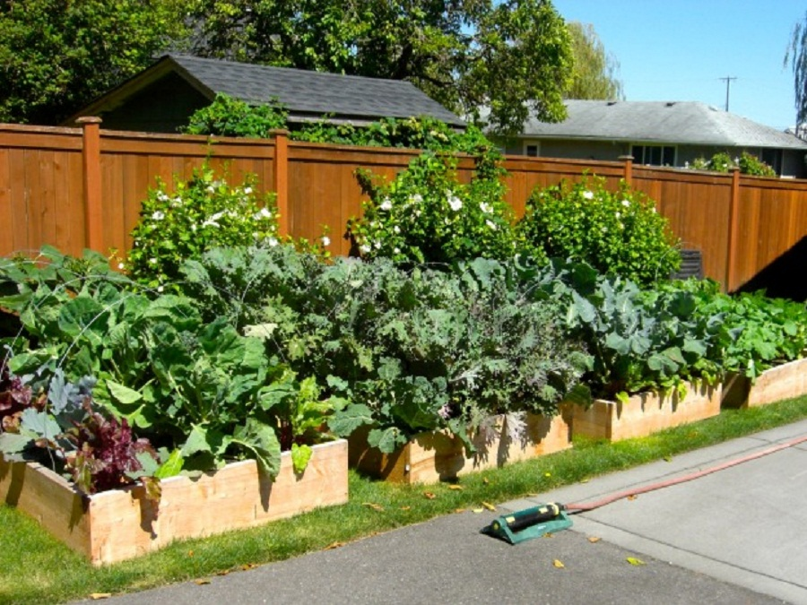 Picture of: raised vegetable garden ideas yard