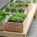 Urban Indoor Vegetable Garden Ideas