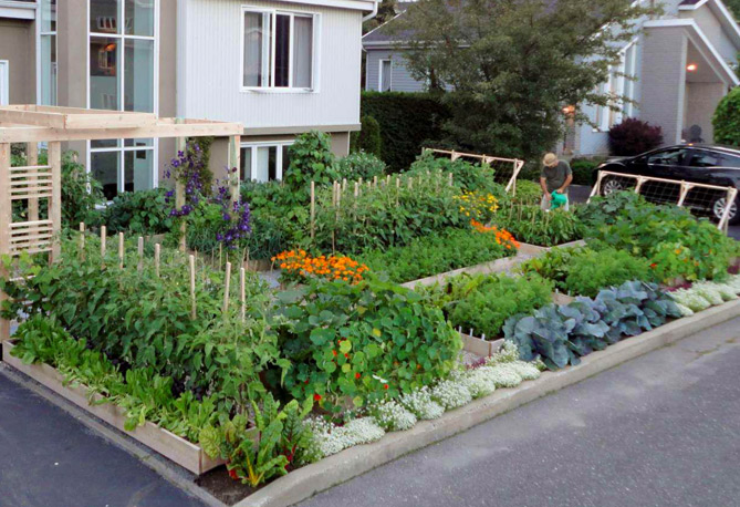 Image of: urban potted vegetable garden