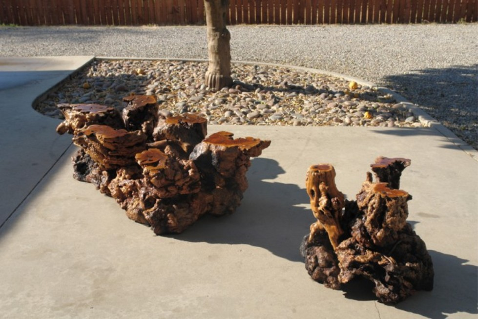 Burl wood slab coffee table