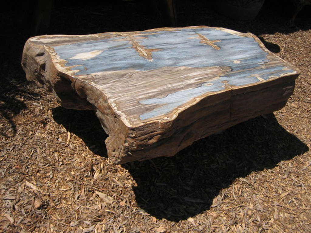 Picture of: buy petrified wood table